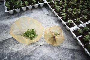 Scoby - alternatywa dla plastikowych opakowań