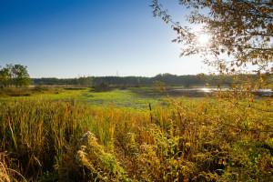 TOP: Najlepsze parki krajobrazowe niedaleko dużych miast