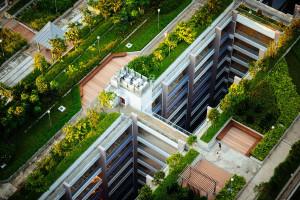 Zielone dachy w Bydgoszczy