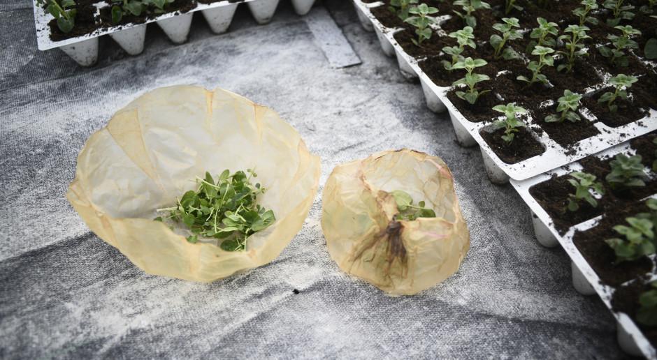 Polka z grantem na ekologiczną alternatywę dla plastiku. Czy niedługo wszyscy będziemy używać SCOBY?