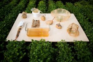 Polska projektantka wynalazła alternatywę dla plastikowych opakowań