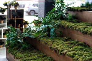 Poznań zaskoczył roślinną strefą w centrum miasta
