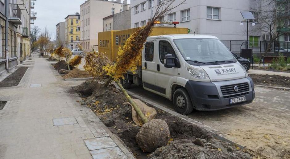 Szpaler drzew wizytówką najdłuższego woonerfu w Łodzi