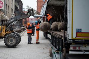 Łódź rozpoczęła sadzenie zielonej ściany