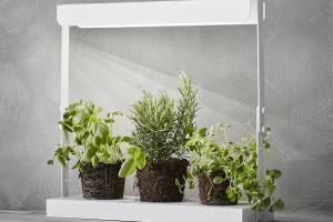 Rośliny bliżej światła