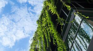 Łódź dofinansuje prywatne inwestycje w zieleń