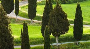 Nową kolekcję drzew w Gdyni posadzili... kosmonauci