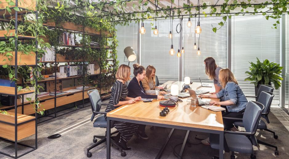 Zieleń w biurze - zaplanuj z nami krok po kroku
