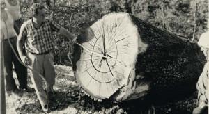 Kultura starego drewna