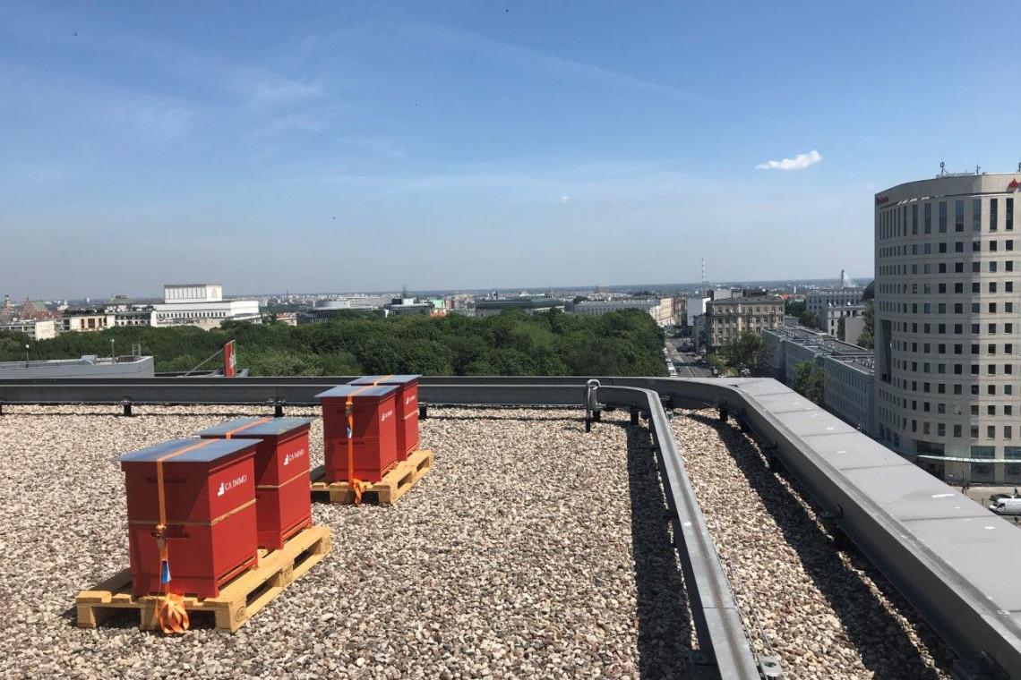 Miejskie pasieki w centrum Warszawy. Na dachu biurowca Saski Crescent