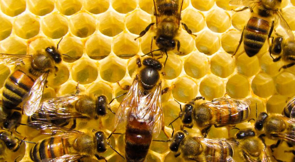 Pszczoły dla miast przyszłości