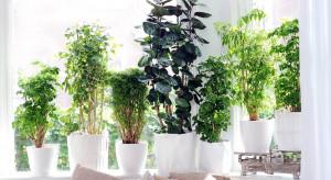 Rośliny kontra smog