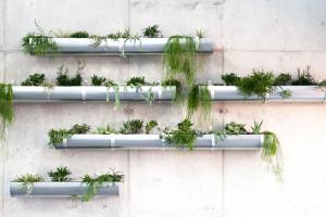 Ogrody wertykalne i zielone dachy remedium na kryzys klimatyczny. Z firmą Hadart o zrównoważonym rozwoju