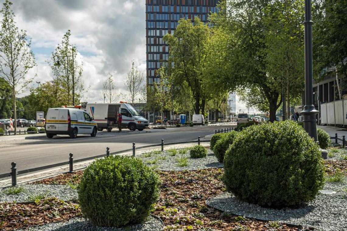 Łódź posadzi tysiące drzew