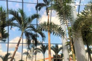 Czas na egzotykę! Pierwsze palmy i bungalowy przyjechały do Park of Poland