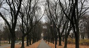 Oświetlenie uliczne w Tczewie do modernizacji