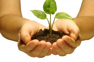 Jedno dziecko, jedno drzewo. Akcja sadzenia drzew w Szczecinie