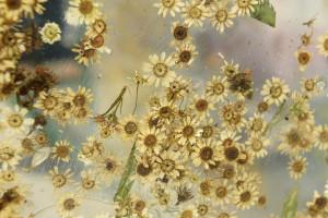 """Przystanek """"Nostalgia"""". Oto wiata zbudowana z kwiatów zatopionych w bezbarwnej żywicy"""