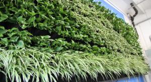 Rośliny mają moc – zielona ściana w fabryce Interprint