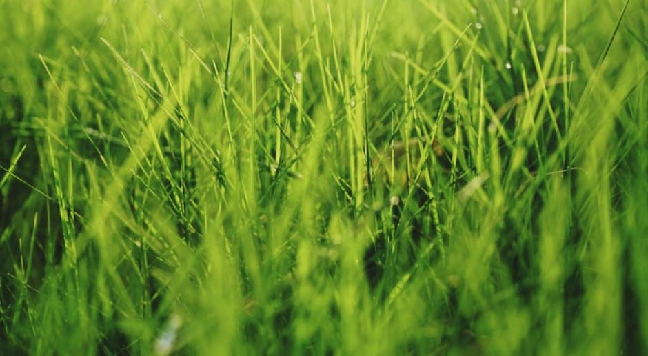Warszawski Ursynów stawia na naturalne trawniki, bo mają pozytywny wpływ na ekosystem