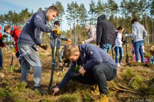 Setki tysięcy drzew dla Nadleśnictwa Lipusz od Torusa i przyjaciół