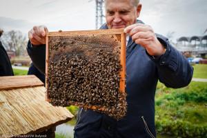 Białystok miastem przyjaznym pszczołom - doceniono miejskie pasieki i łąki kwietne