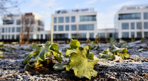 Ogród deszczowy, czyli kolejne ekologiczne rozwiązanie w Gdyni