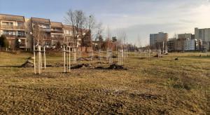 Tychy chcą zmienić oblicze tego parku
