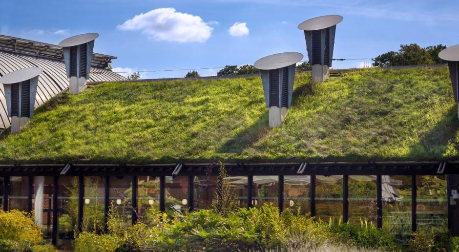 Zielone dachy sposobem na zieleń w mieście