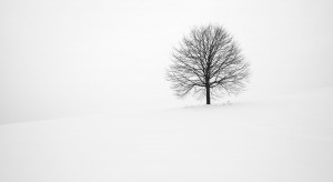Najciekawsze drzewo w Europie. Polski kandydat jest z Rzeszowa
