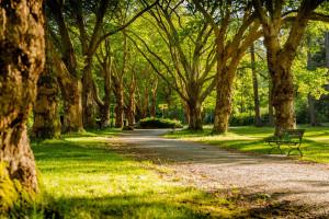 Szczecin planuje posadzić blisko 20 tys. drzew