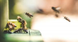 W Kotlinie Kłodzkiej powstają hoteliki i ogrody dla pszczół