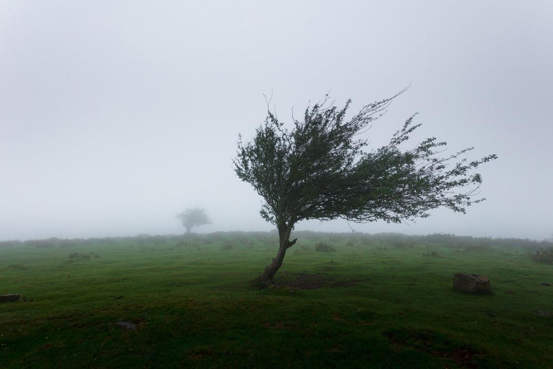 Wiatr znów wyrządził szkody w zabytkowym parku Habsburgów