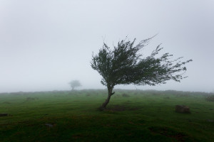 Trwa konkurs na Europejskie Drzewo Roku. Głosowanie tylko do końca lutego!