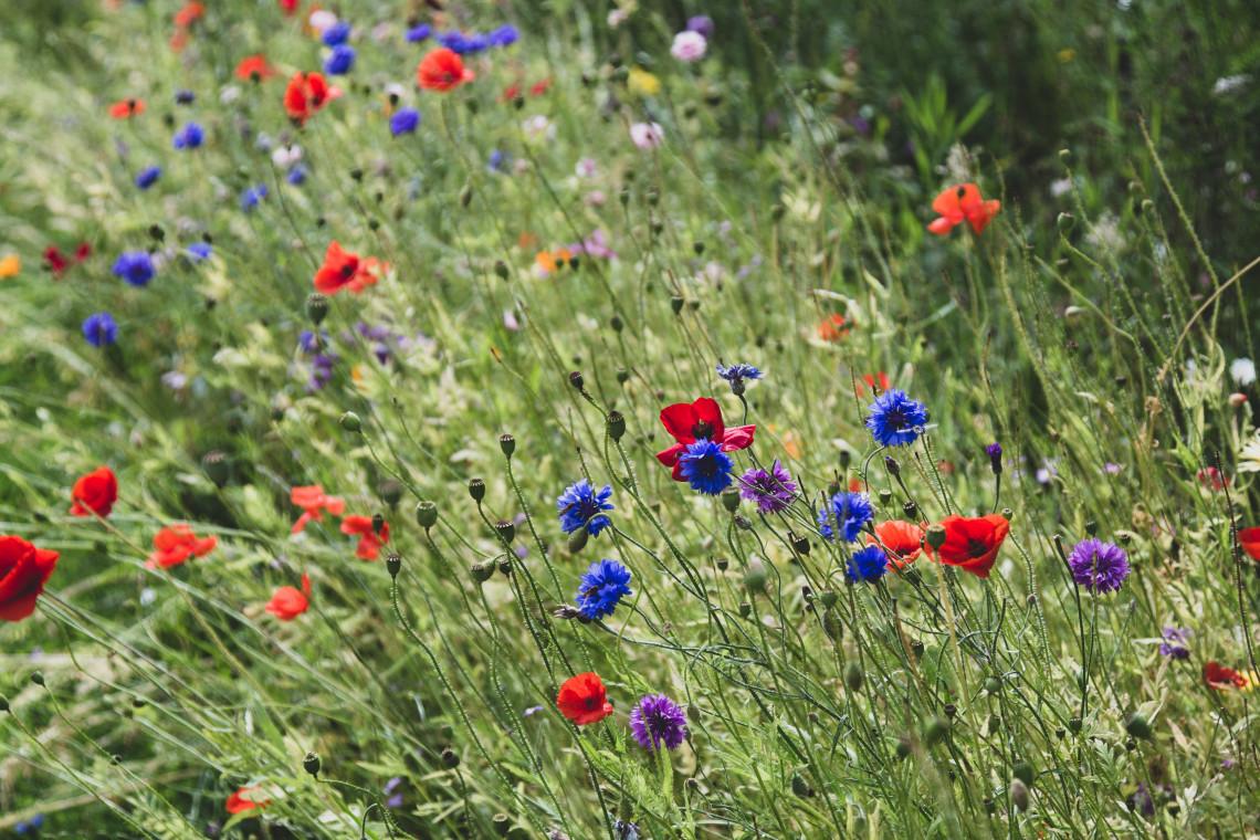 Mieszkańcy Sopotu wskażą lokalizacje łąk kwietnych
