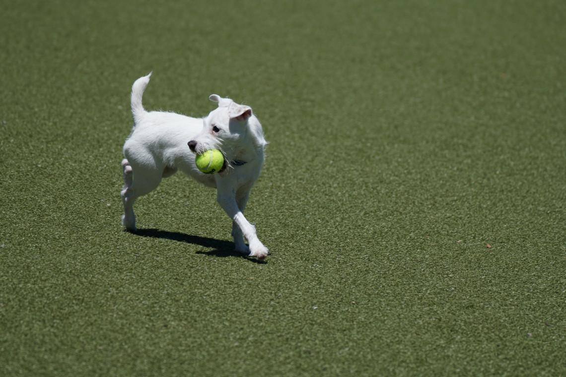 W Małym Kacku powstanie wybieg dla psów