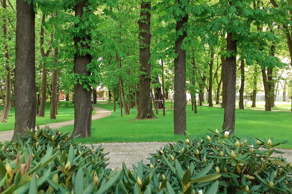Zaniedbany teren w Poznaniu zmienił się w malowniczy park