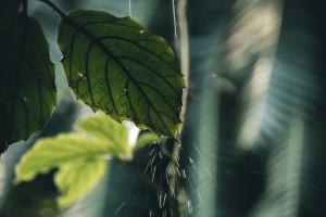 Ogród deszczowy powstaje w Krakowie. Inwestycja za 7 mln zł