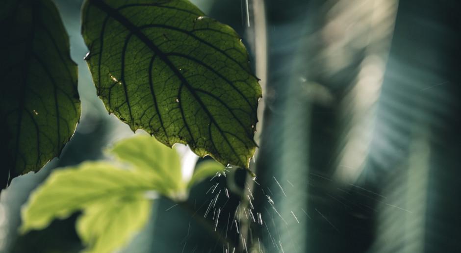 Woda deszczowa, czyli z każdej chmury cenny deszcz