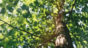 Kraków inwestuje w zieleń. W ciągu 5 lat miasto wydało na nią pół mld złotych