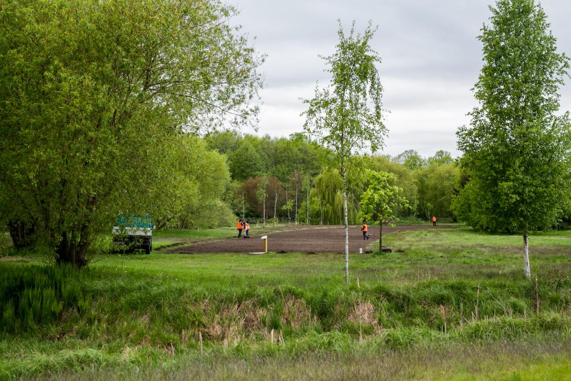 Gdańsk rozkwitnie latem. Ponad 7 tys. mkw. łąk kwietnych w mieście
