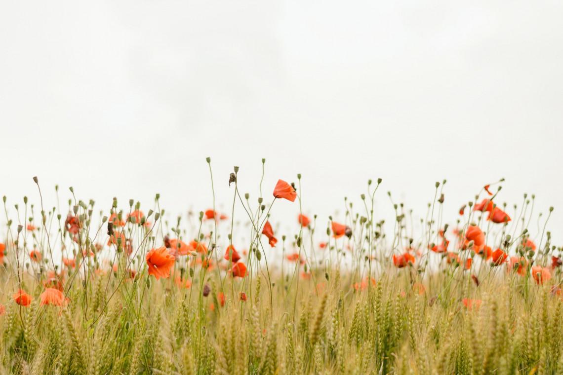 Kolejne kwietne łąki powstaną w Bielsku-Białej