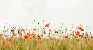 Przybędzie łąk kwietnych w Gorzowie Wlkp.