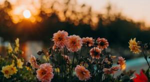 Ekolodzy rozdadzą sadzonki drzew i kwiatów za surowce wtórne