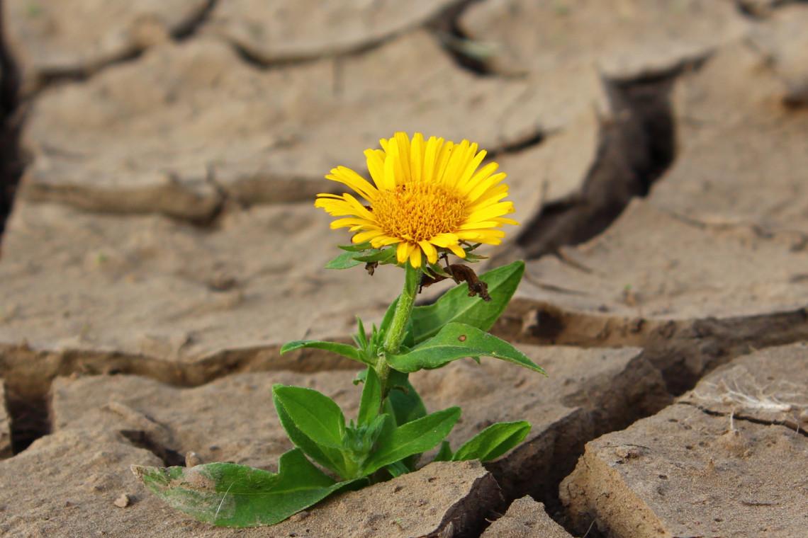 Walka ze zmianami klimatu. Jak mycie warzyw może pomóc w oszczędzaniu wody, a dbanie o ogród pszczołom?