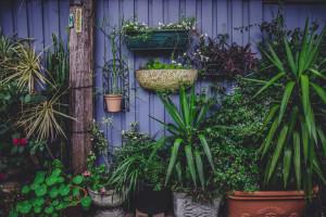Mieszkańcy Katowic adoptują... donice. Nietypowy pomysł na zieleń w mieście