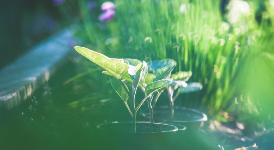 Zbiorniki wodne w uroczysku Las Miejski w Giżycku będą zmodernizowane w ramach adaptacji do zmian klimatu