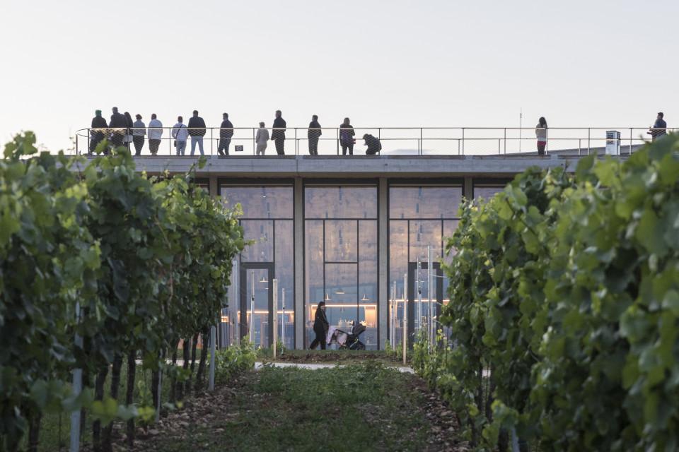 Winiarnia z amfiteatrem na dachu. Niezwykły projekt Chybik+Kristof
