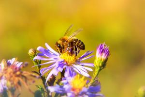 Zarząd Zieleni Miejskiej w Krakowie przygotował kodeks dobrych praktyk chroniących owady