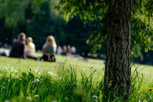 Kolejna zielona przestrzeń miejska w Gdyni